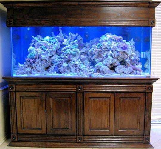 Muebles para acuario hd 1080p 4k foto - Pecera con mueble ...